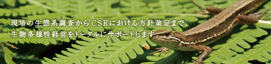 現場の生態系調査からCSRにおける方針策定まで、生物多様性経営をトータルにサポートします。