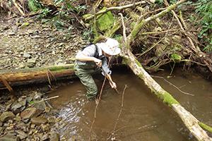 生態系調査と利活用への展開のイメージ